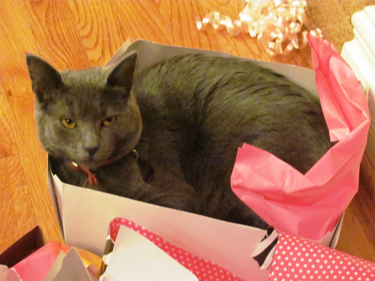 Cats are a gift that keep on giving.  A cardboard box and some wrapping paper can provide a world of entertainment.