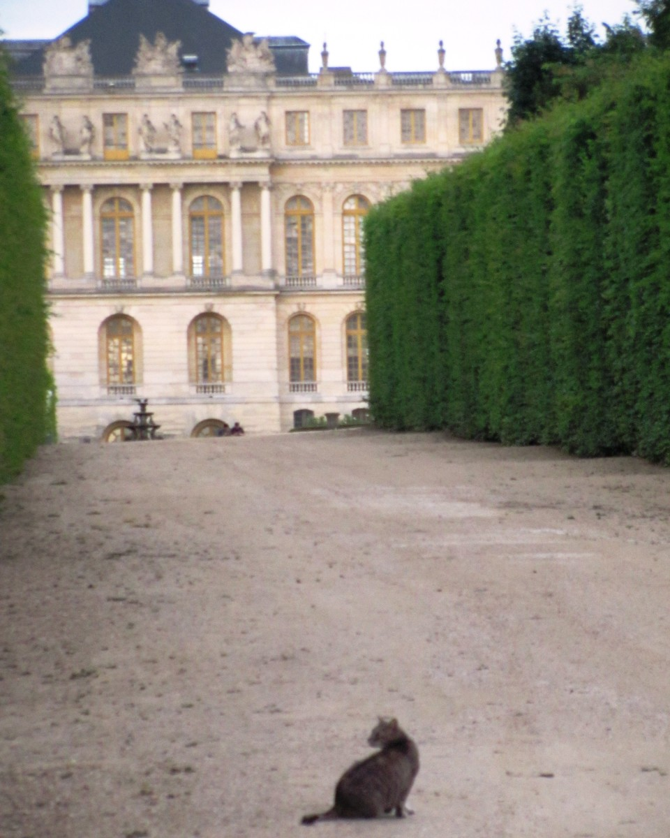 This cat lounges on the grounds of Versailles in Paris.  Could he be royalty?
