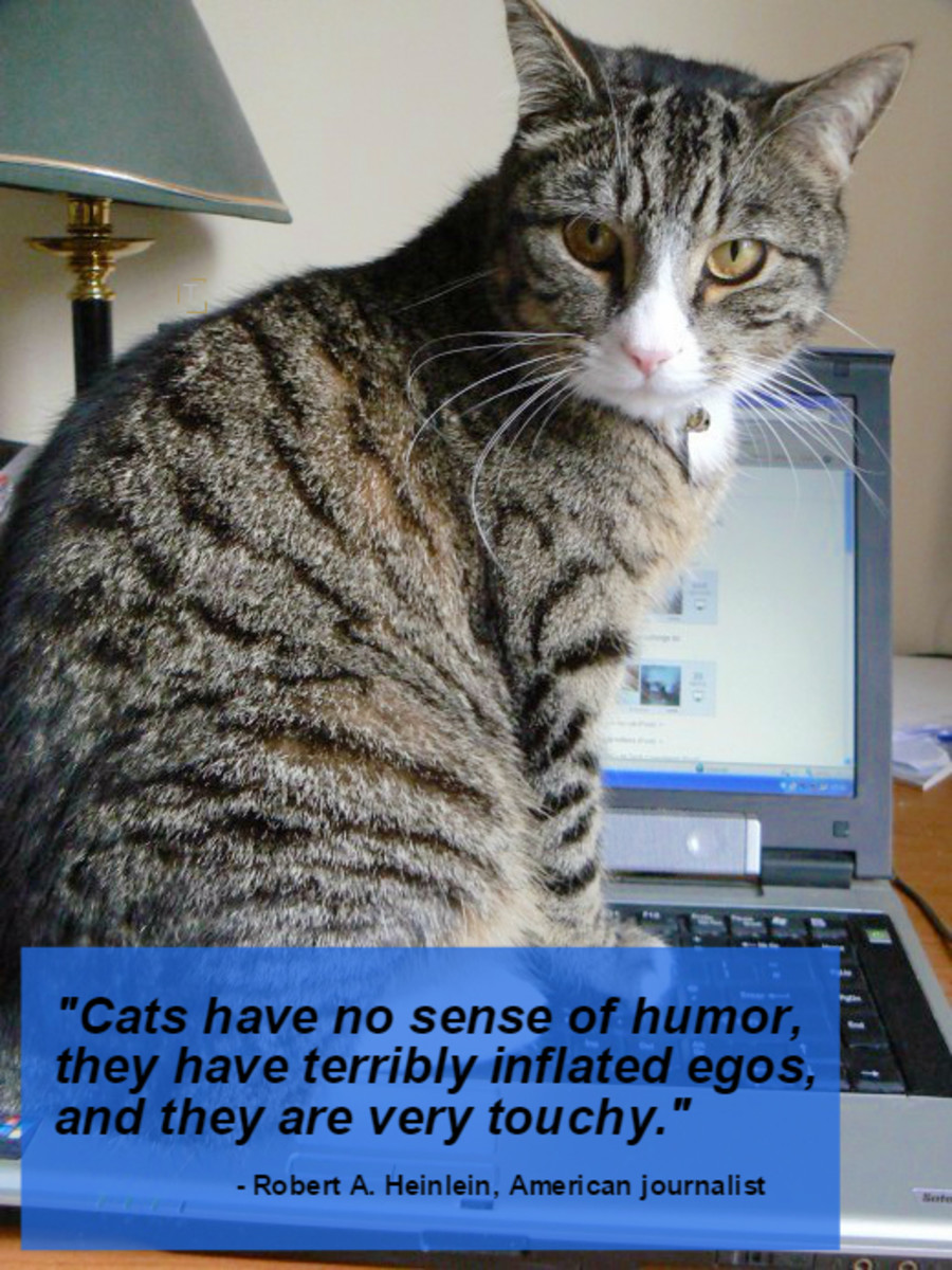 """Cats have no sense of humor, they have terribly inflated egos, and they are very touchy."" - Robert A. Heinlein, American journalist"