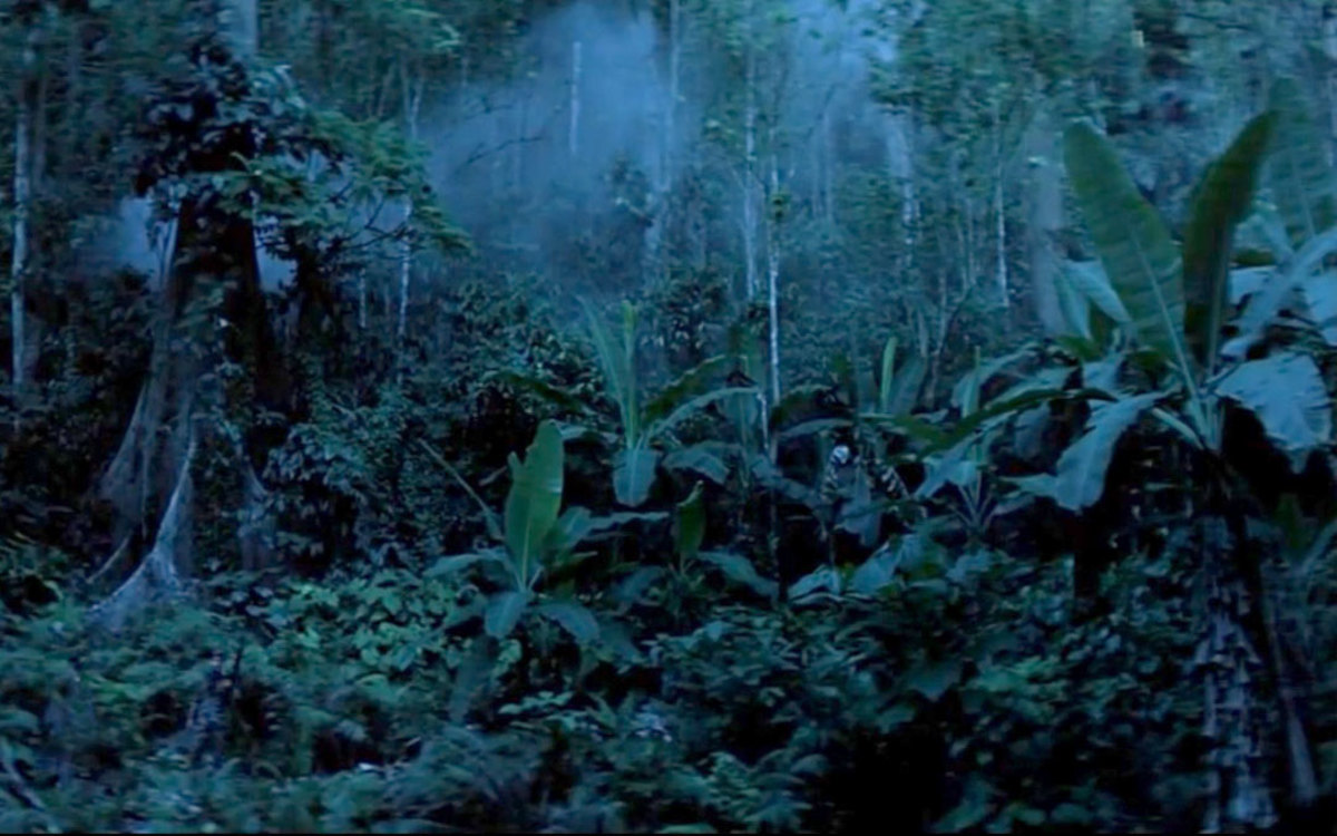 Shady rainforest understory with banana trees