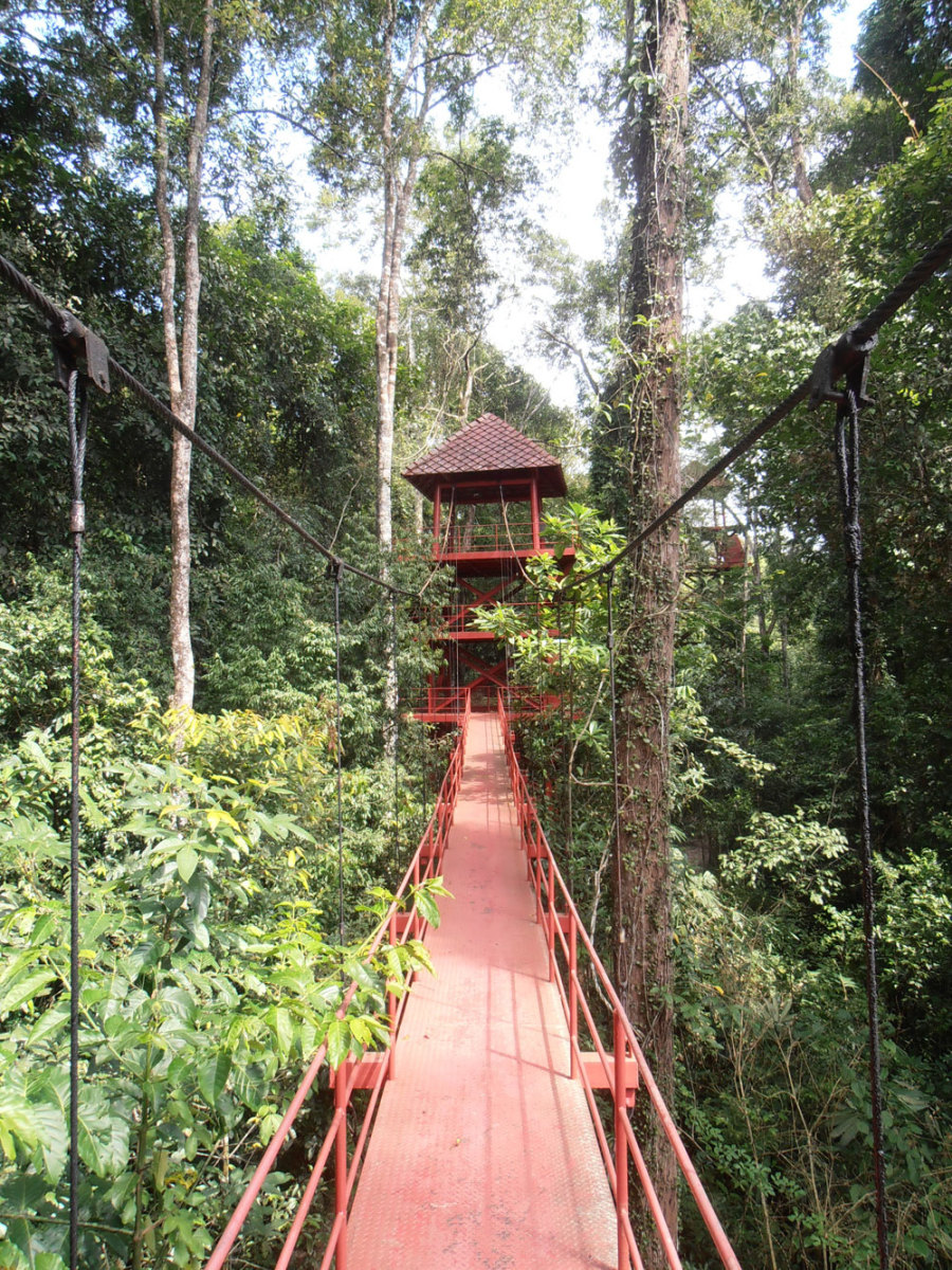 A canopy walkway in Thailand