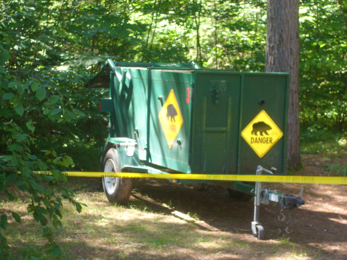 A black bear trap was set up in Pog Lake campground, August 2013. A black bear was spotted in the area by several campers.