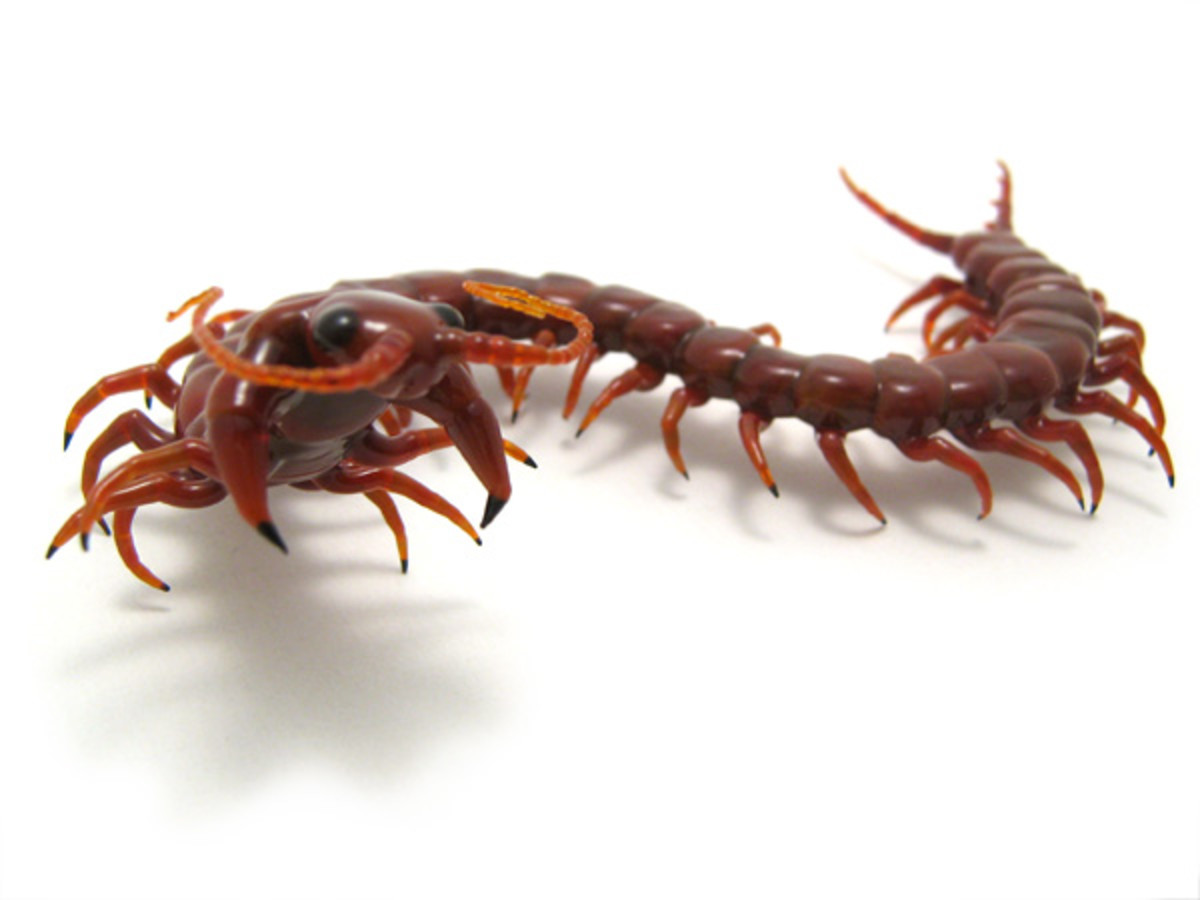 Do Centipedes Bite? | Owlcation