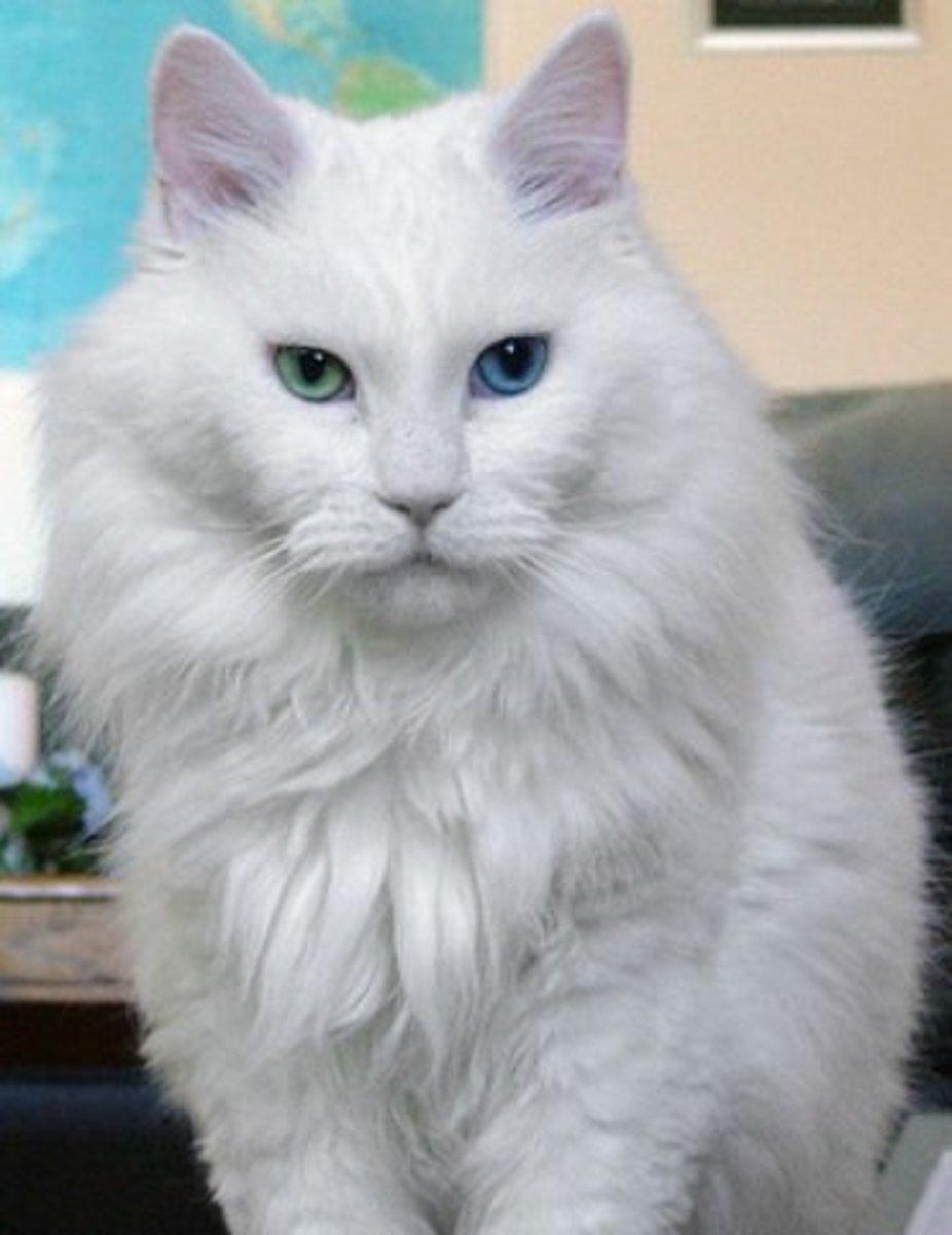 Sebastian has Complete heterochromia (Iridum)