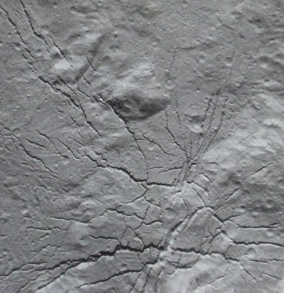Cracks in Occator Crater, possibly from subsurface cryovolcano pressure.