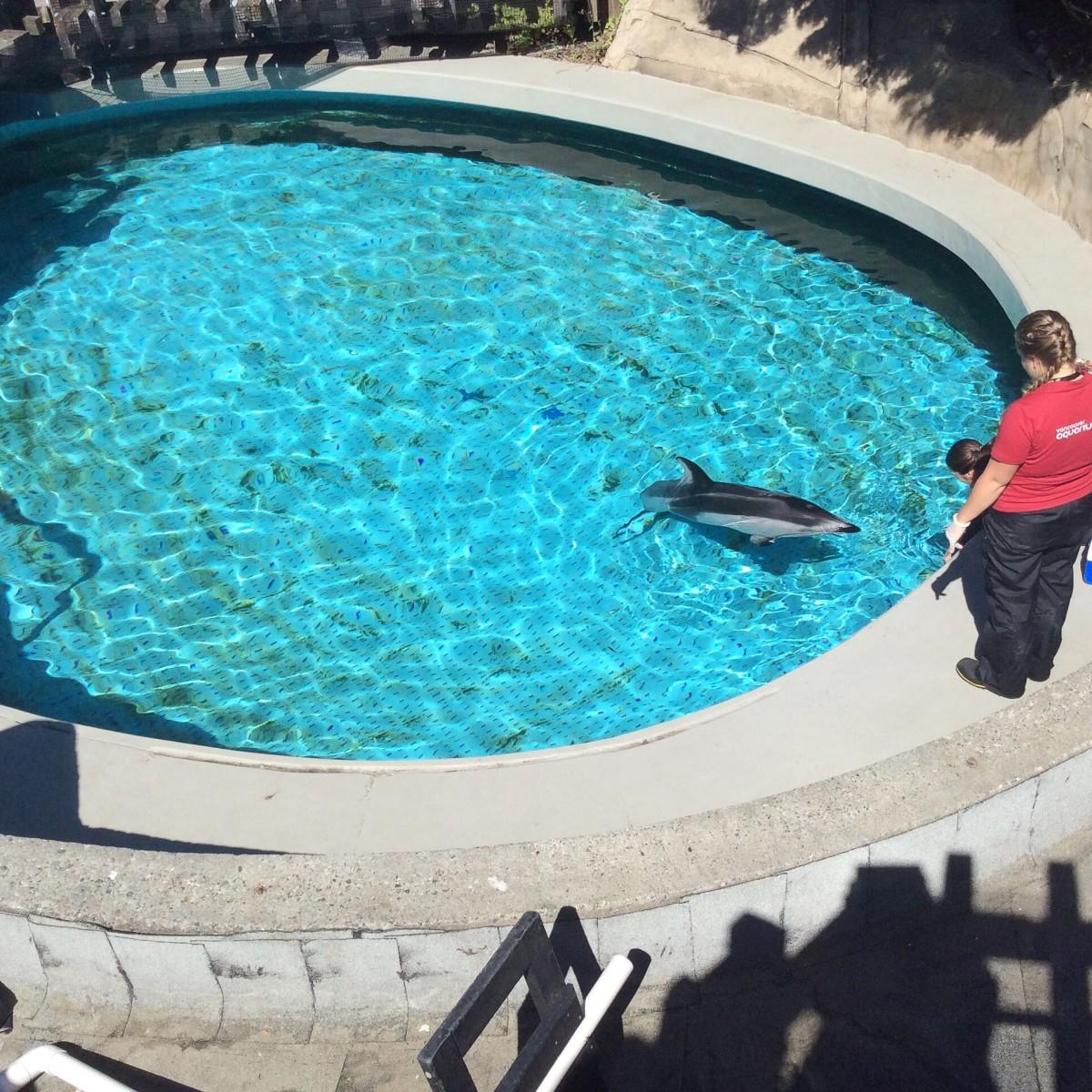 Aquarium staff talk to Helen after Hana's death