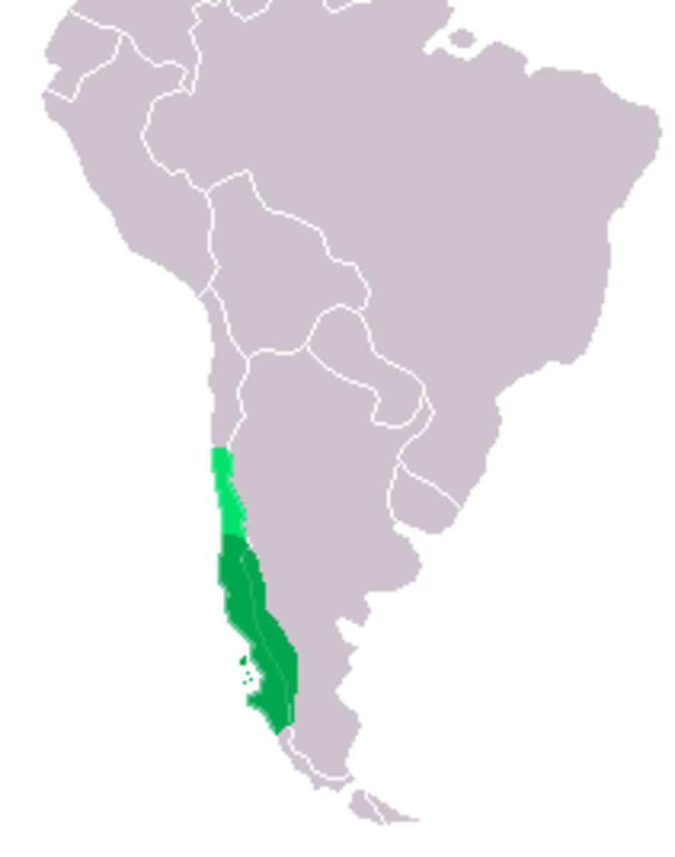 Distribution of the Kodkod (Oncifelis guigna),