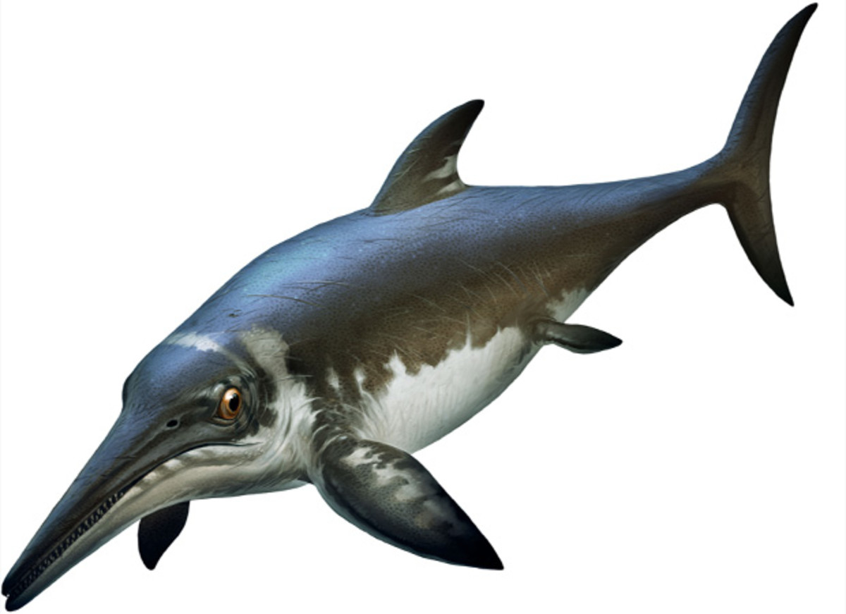 Platypterygius, one of the last ichthyosaurs and a possible victim of the Cenomanian-Turonian extinction. Art by Xing Lida.