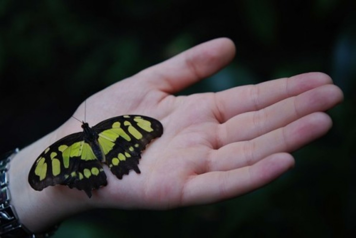 Artificial skin can be so sensitive that it can feel a butterfly landing. 3d printed natural skin will likely be able to do so.