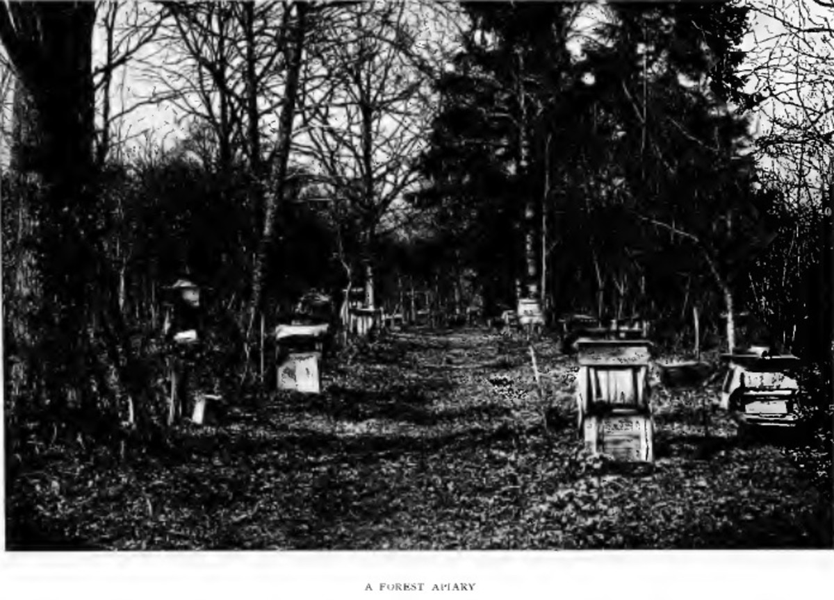 Forest Apiary from Bee-Master of Warilow