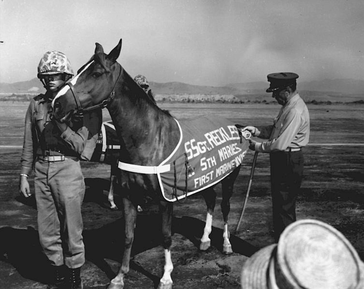 Sergeant Reckless' promotion to Marine Staff Sergeant in 1959 at Camp Pendleton, California. General Randolph M. C. Pate, Commandant of the Marine Corps tacks staff sergeant chevrons on her blanket.