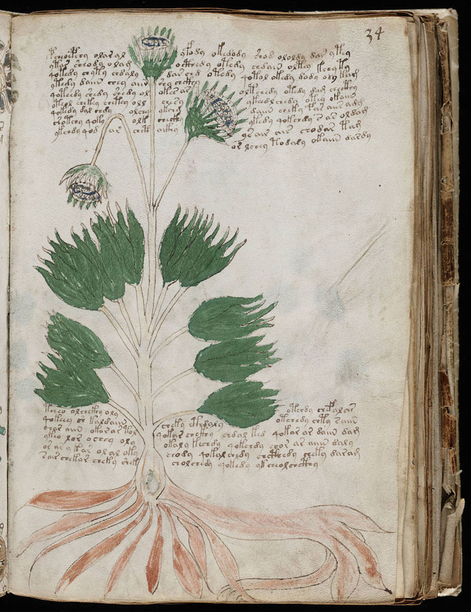 The plants in the Voynich Manuscript have not been identified as any known species.