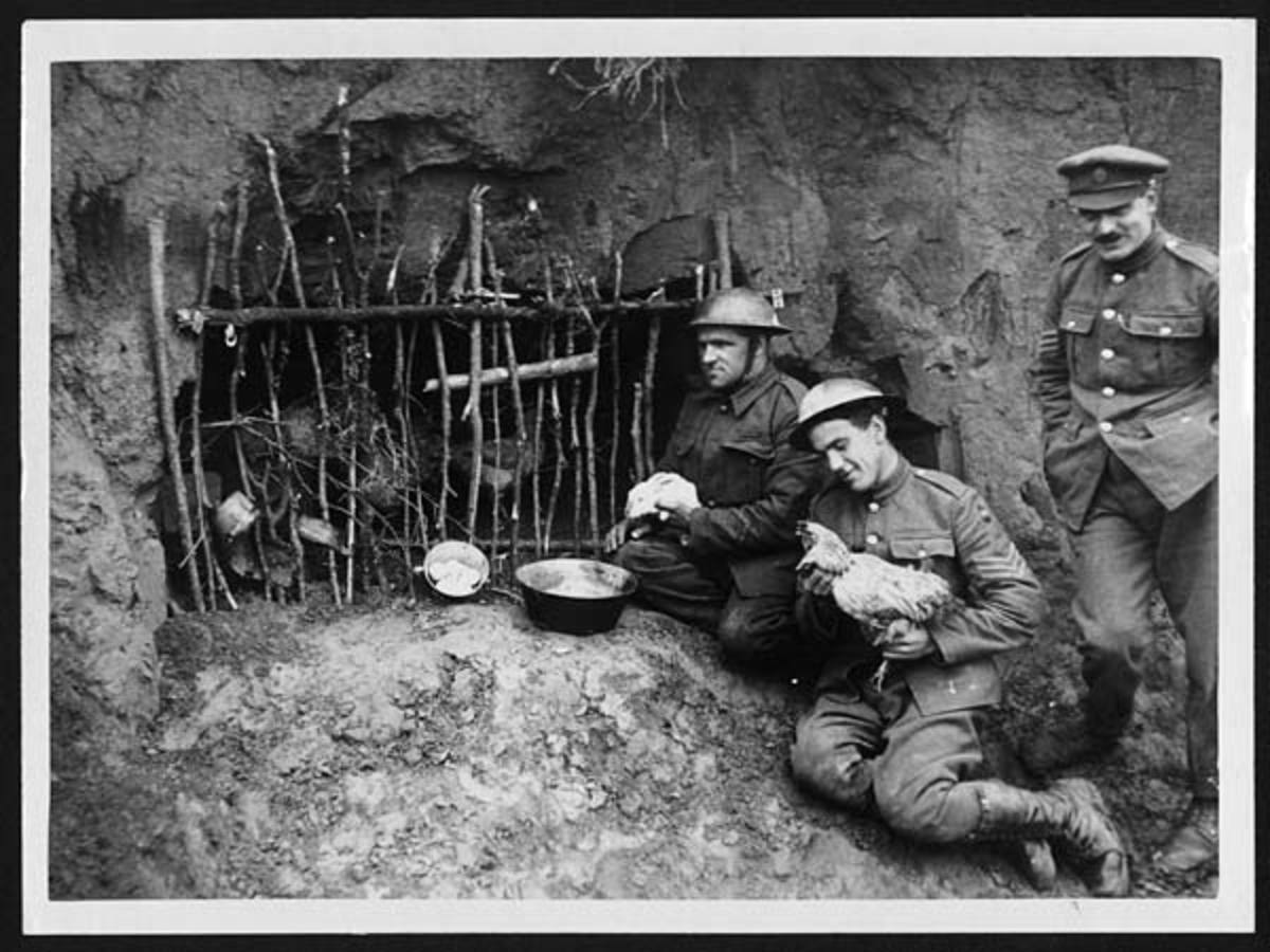 Necessity being the mother of invention, British soldiers have rigged up a chicken coop in their trench to supplement rations.