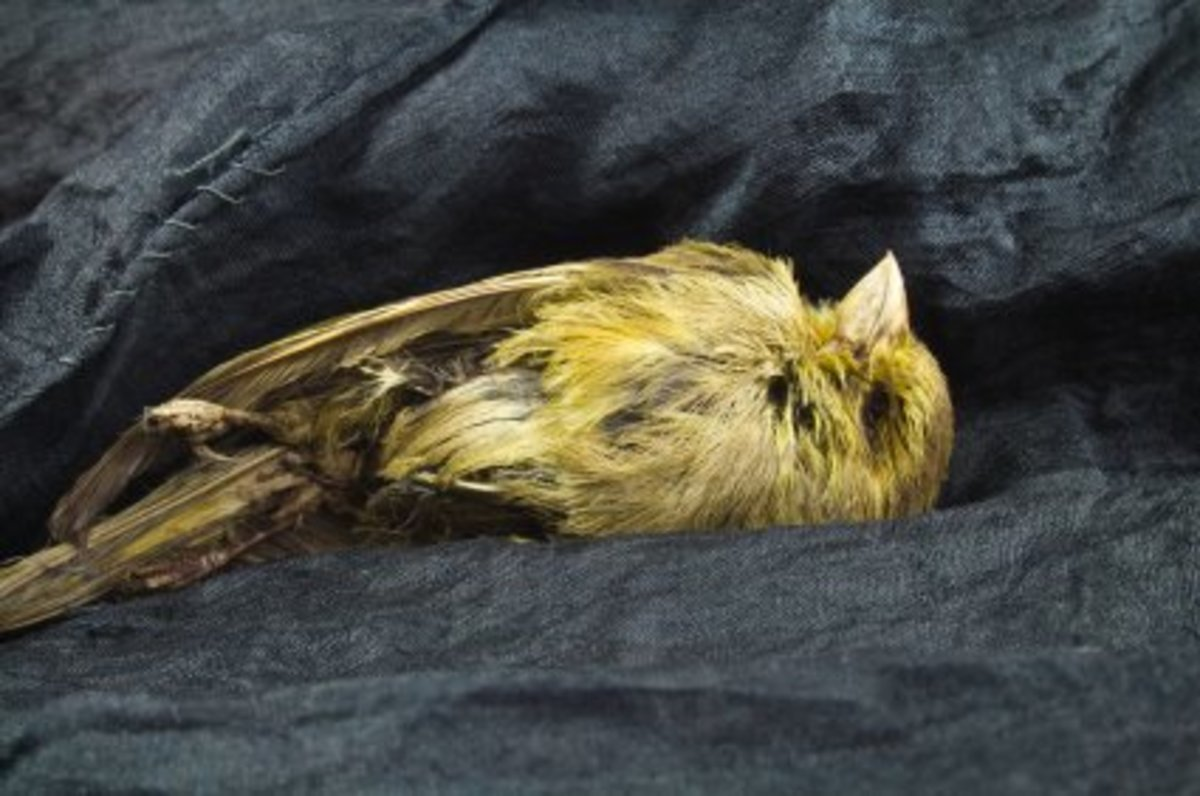 The dead canary and the motive