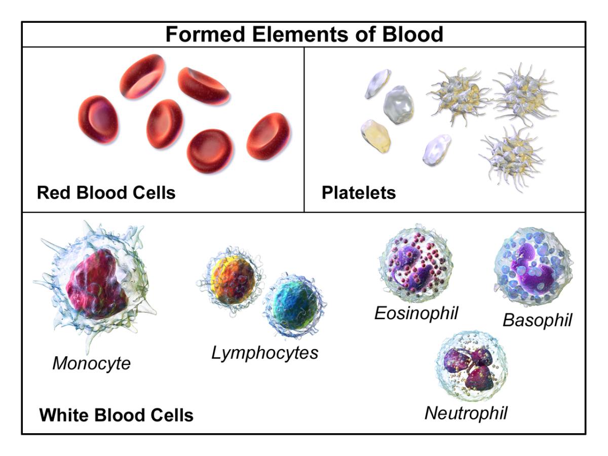 The formed elements of blood are red blood cells, white blood cells, and platelets.