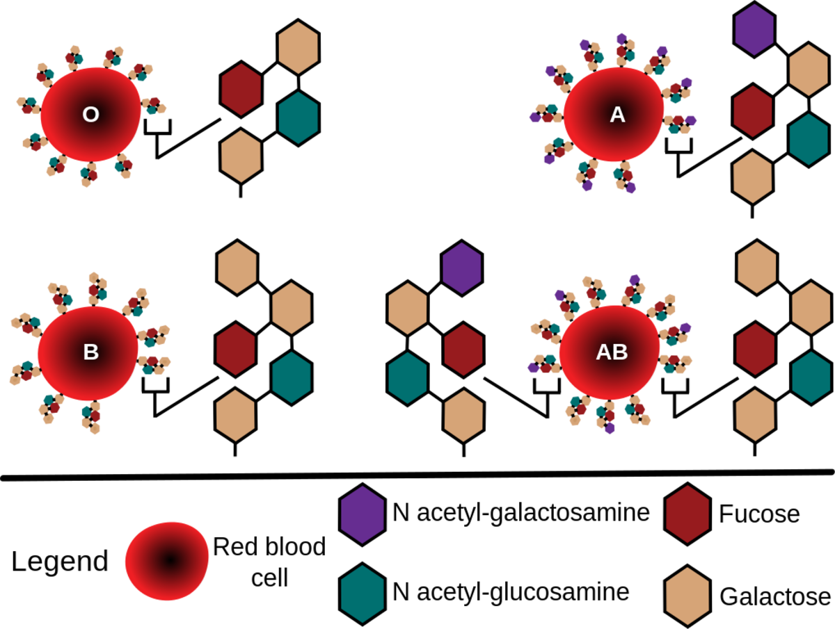 Red blood cell antigens