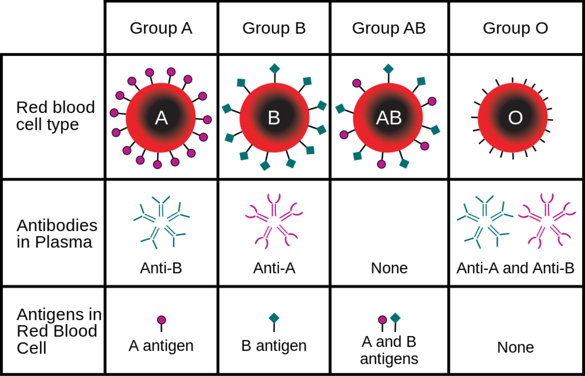 blood-types-and-creating-type-o-with-enzymes-from-microbes