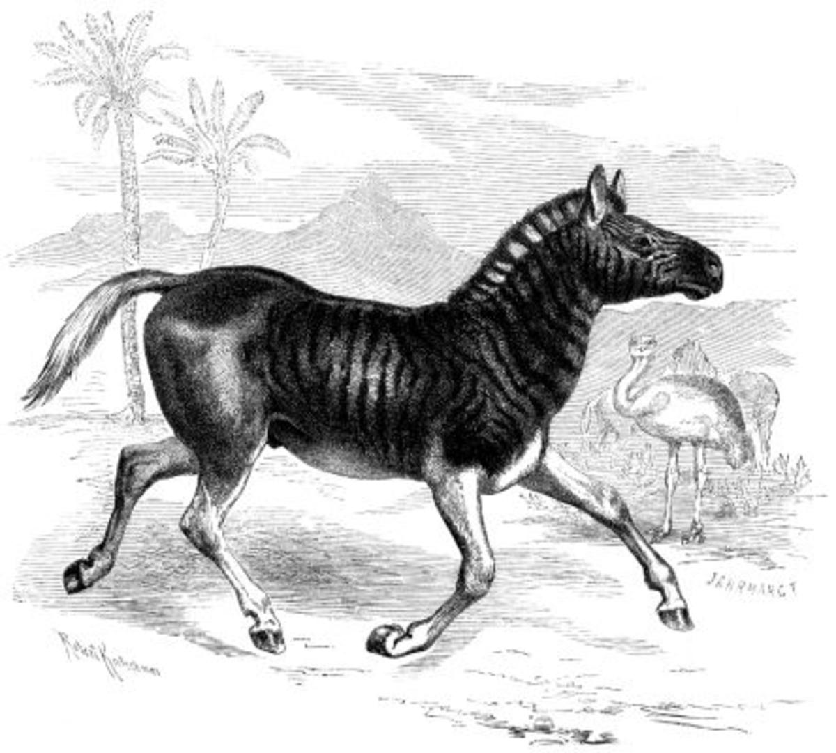 the-last-of-the-last-extinct-species