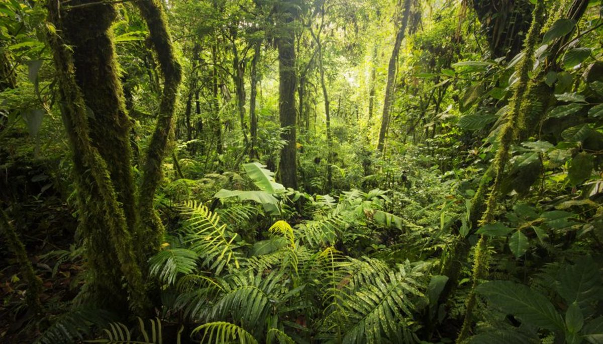 the-tropical-rain-forest