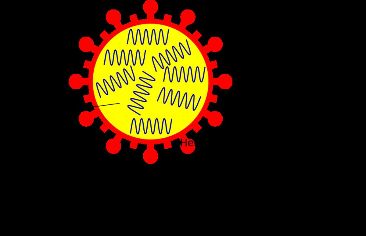 Influenza virus nomenclature