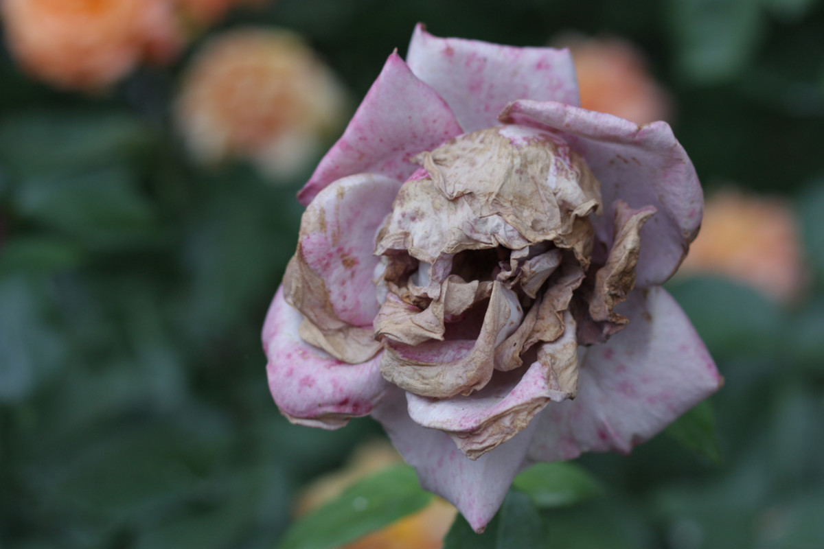 Eerie looking flower, but it is just pareidolia and if seen from a different angle it would look entirely normal.