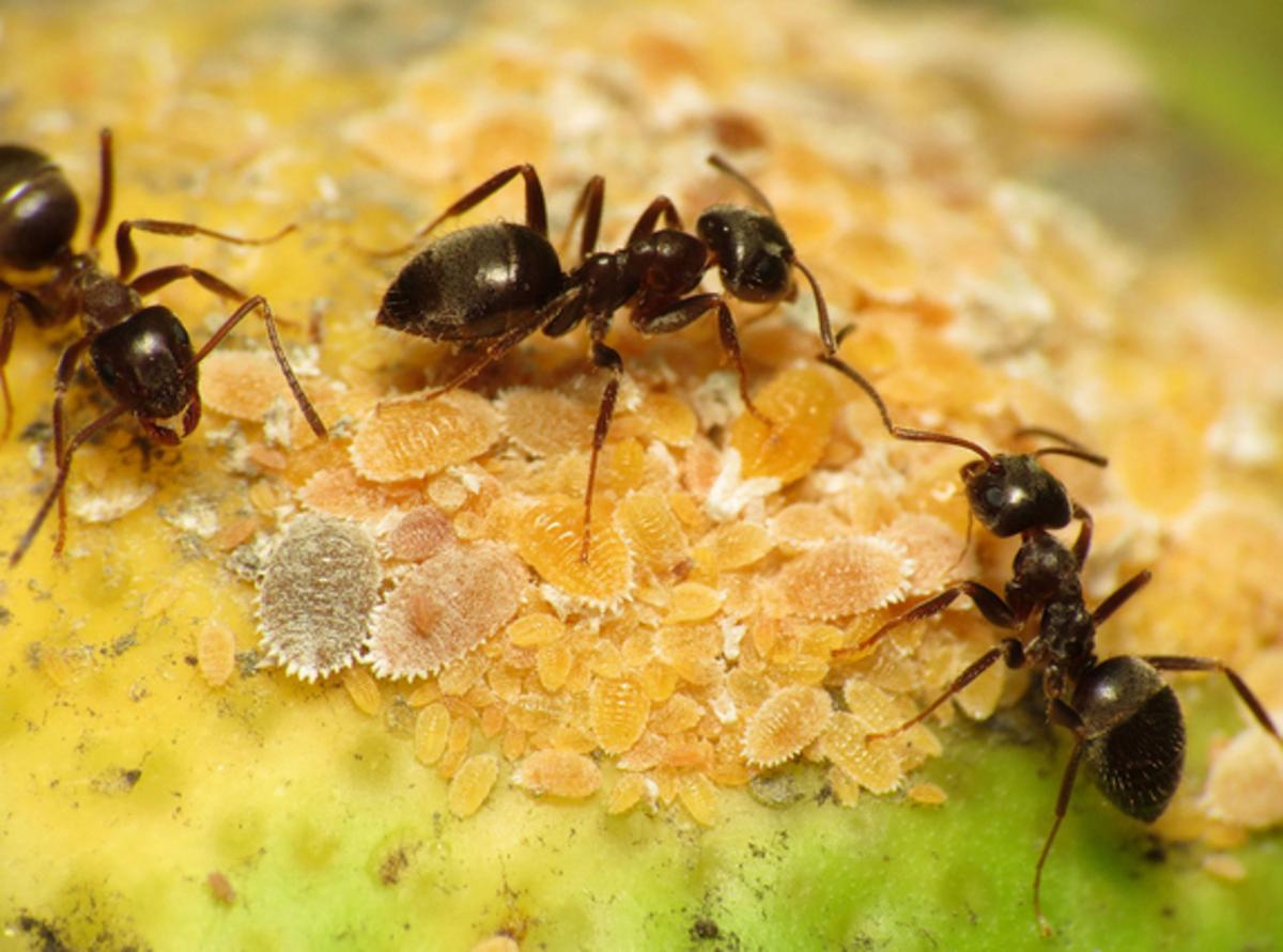 ant-identification