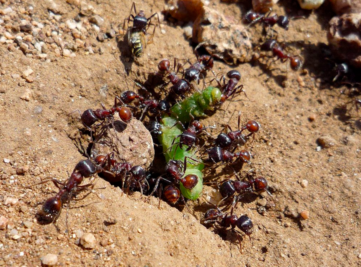 ant-identification
