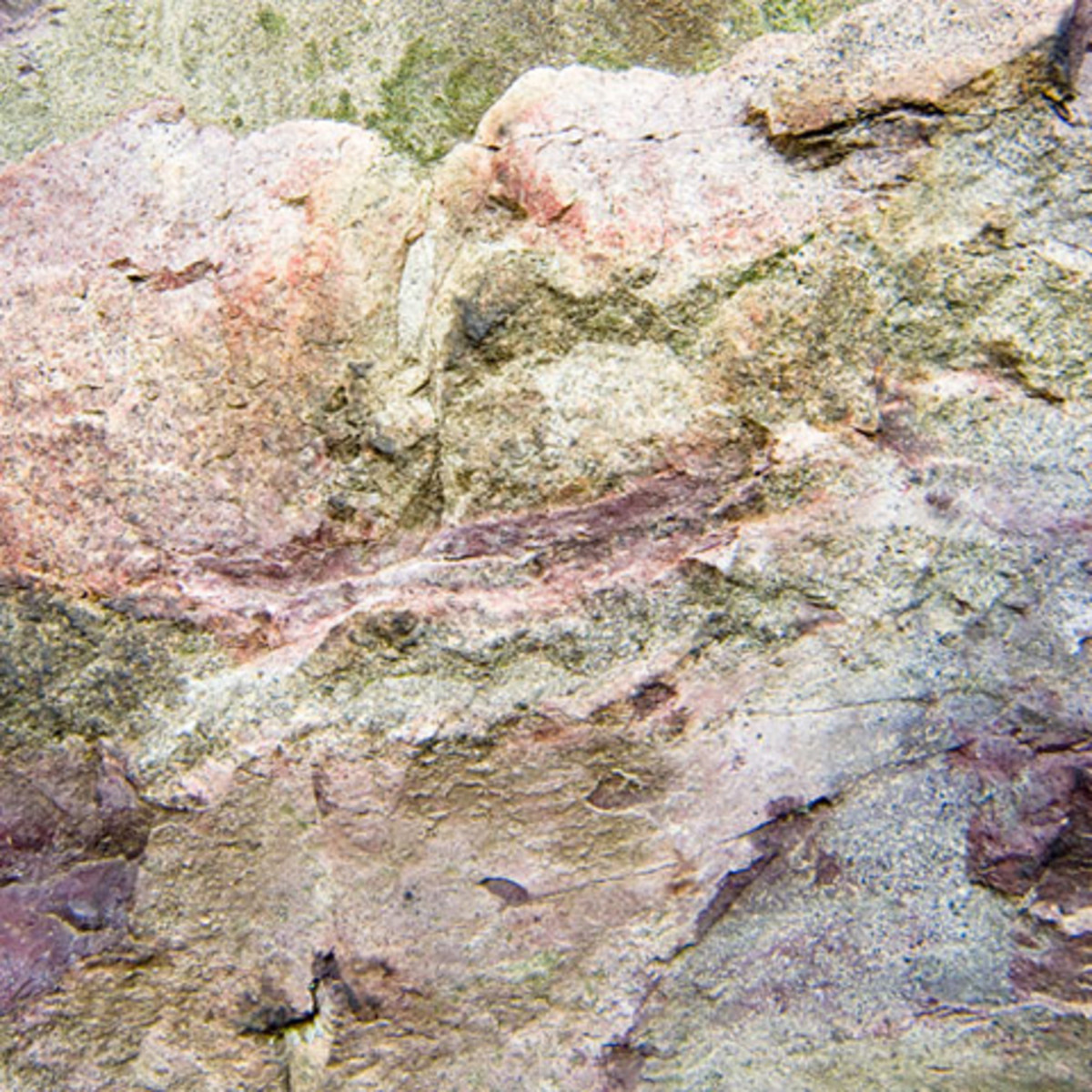 The purplish areas on this rock from the New Jersey Palisades are areas of contact metamorphism. Compared to the rock around them, they are more crumbly due to their exposure to intense 1000 degree heat.