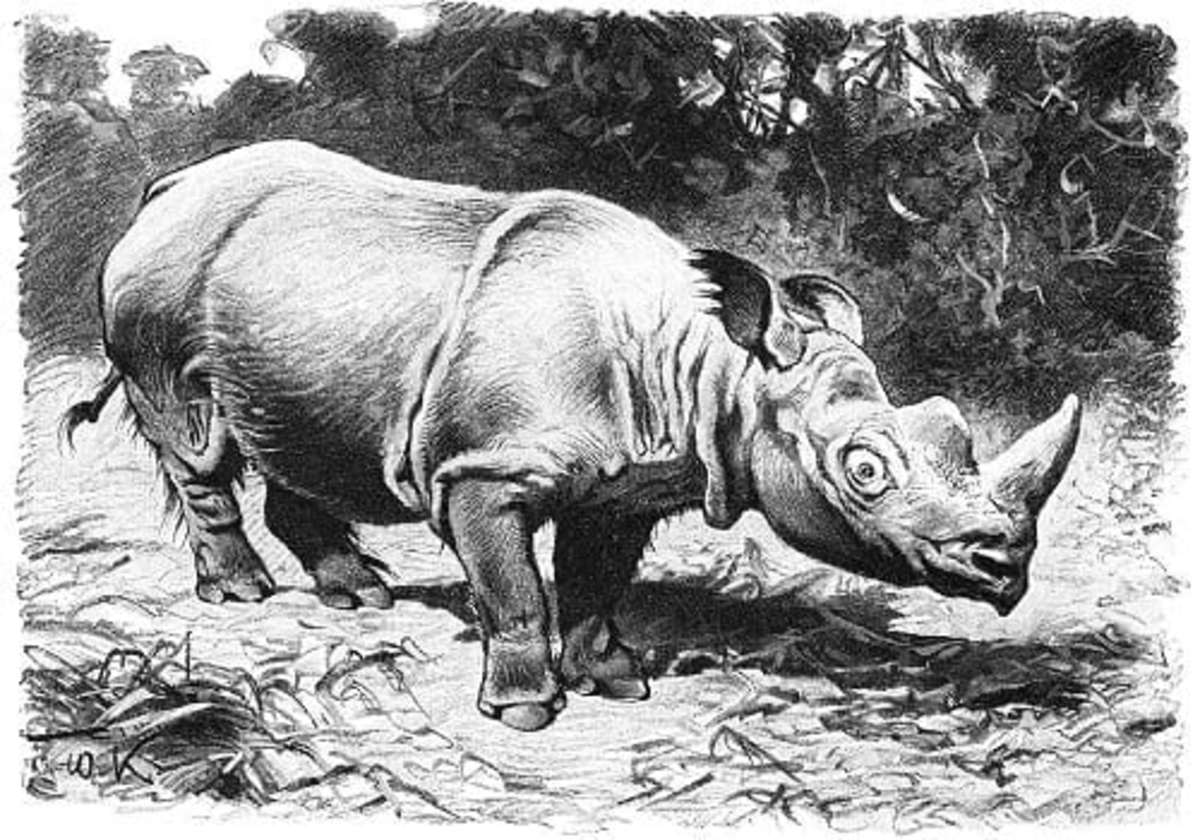 A prehistoric rhinoceros illustration, endemic in the Philippines.