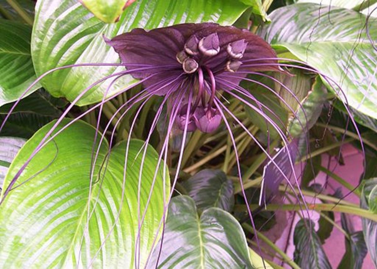 This plant is pollinated by bats.