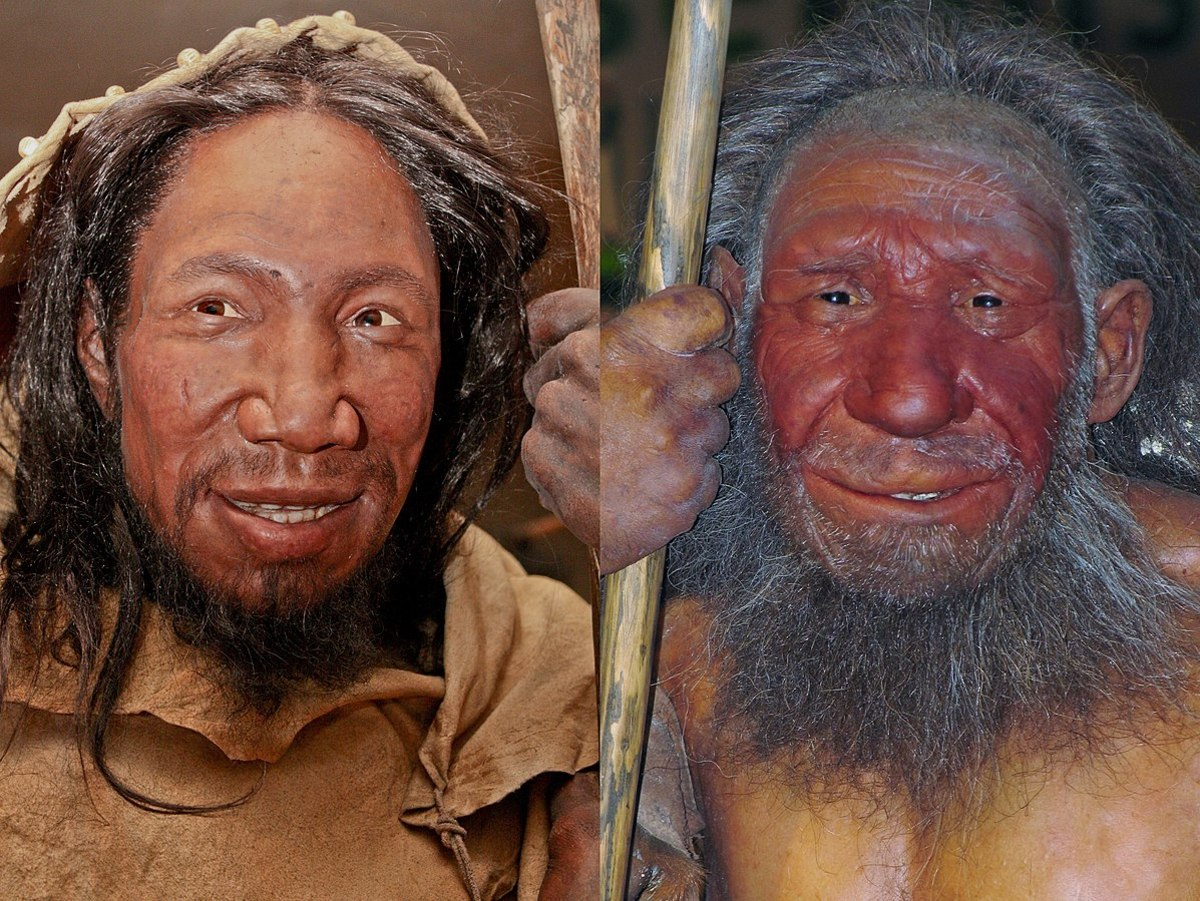 Homo sapiens (left) and homo neanderthalensis as they might have looked when they co-existed in Europe.