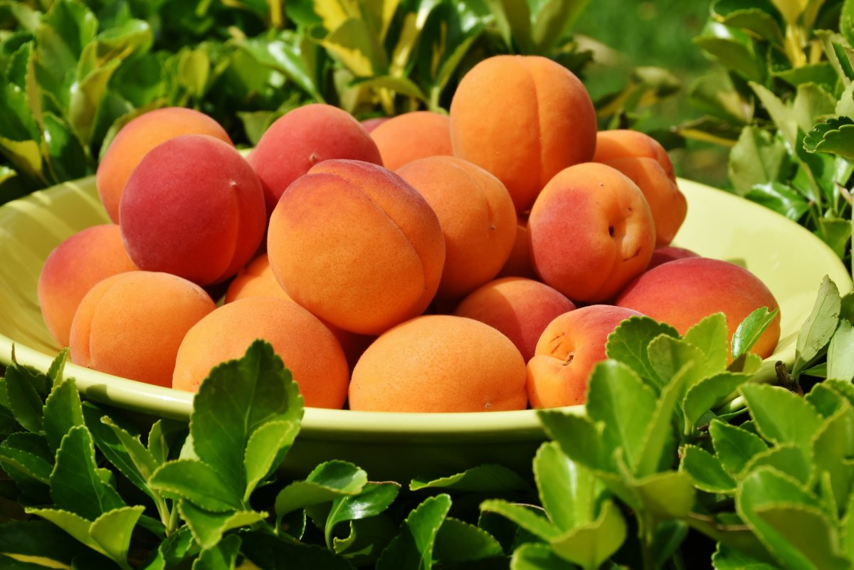 Apricot peach|Aaru|आड़ू