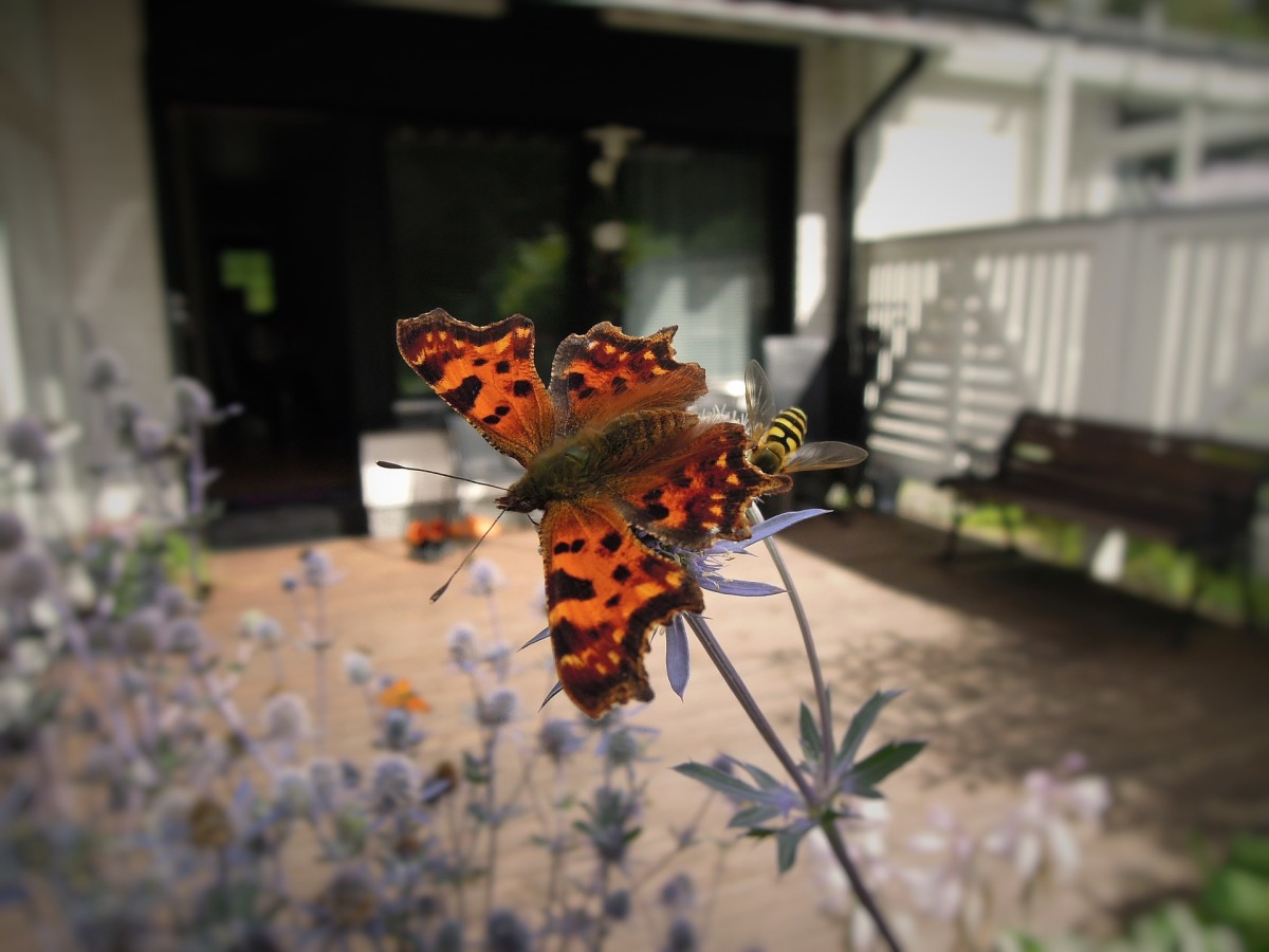 arthropods-bugs-in-our-homes