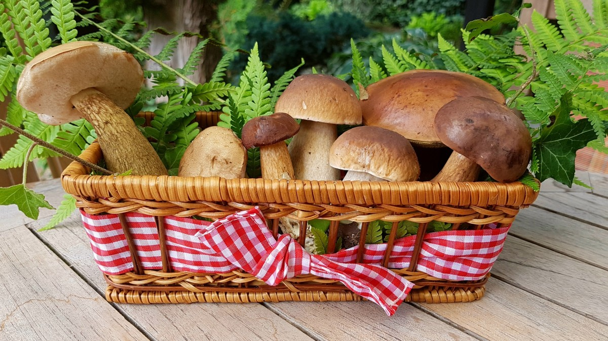 Image for mushroom/champignon
