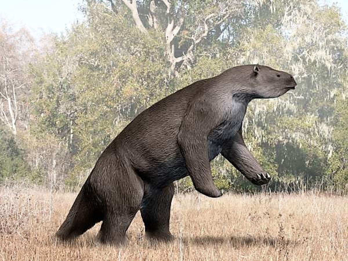 Megatherium americanum was a giant sloth that lived in  South America during the Pleistocene