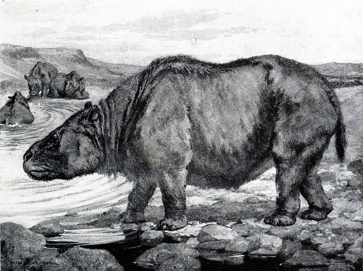Toxodon platensis was also part of the South American megafauna. Its remains were first discovered in La Plata in Argentina.