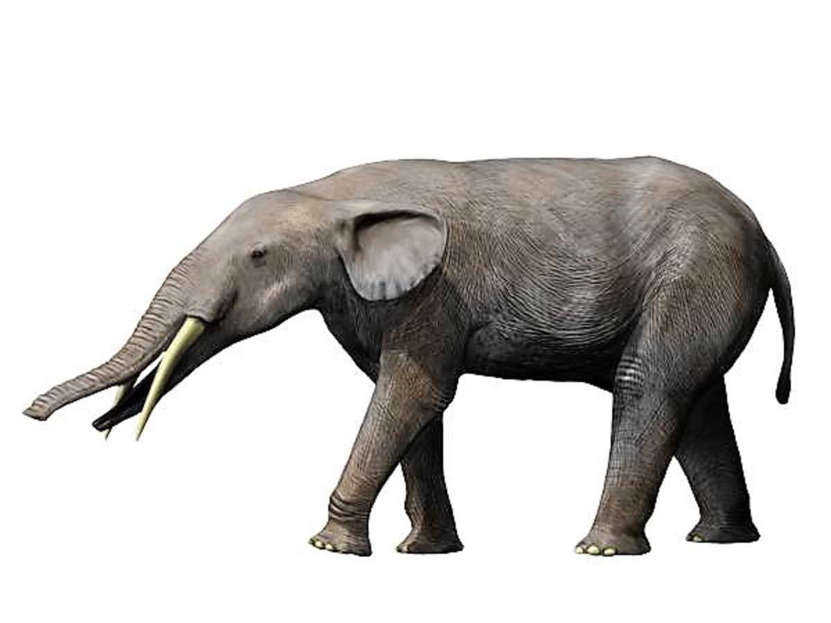 Elephant relatives called gomphotheres were part of the South Americam megafauna. Gomphotherium angustidens (shown here) lived in North America, however.