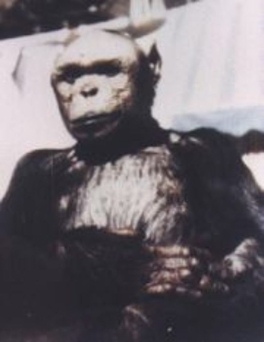 "Oliver the once suspected ""Humanzee"""