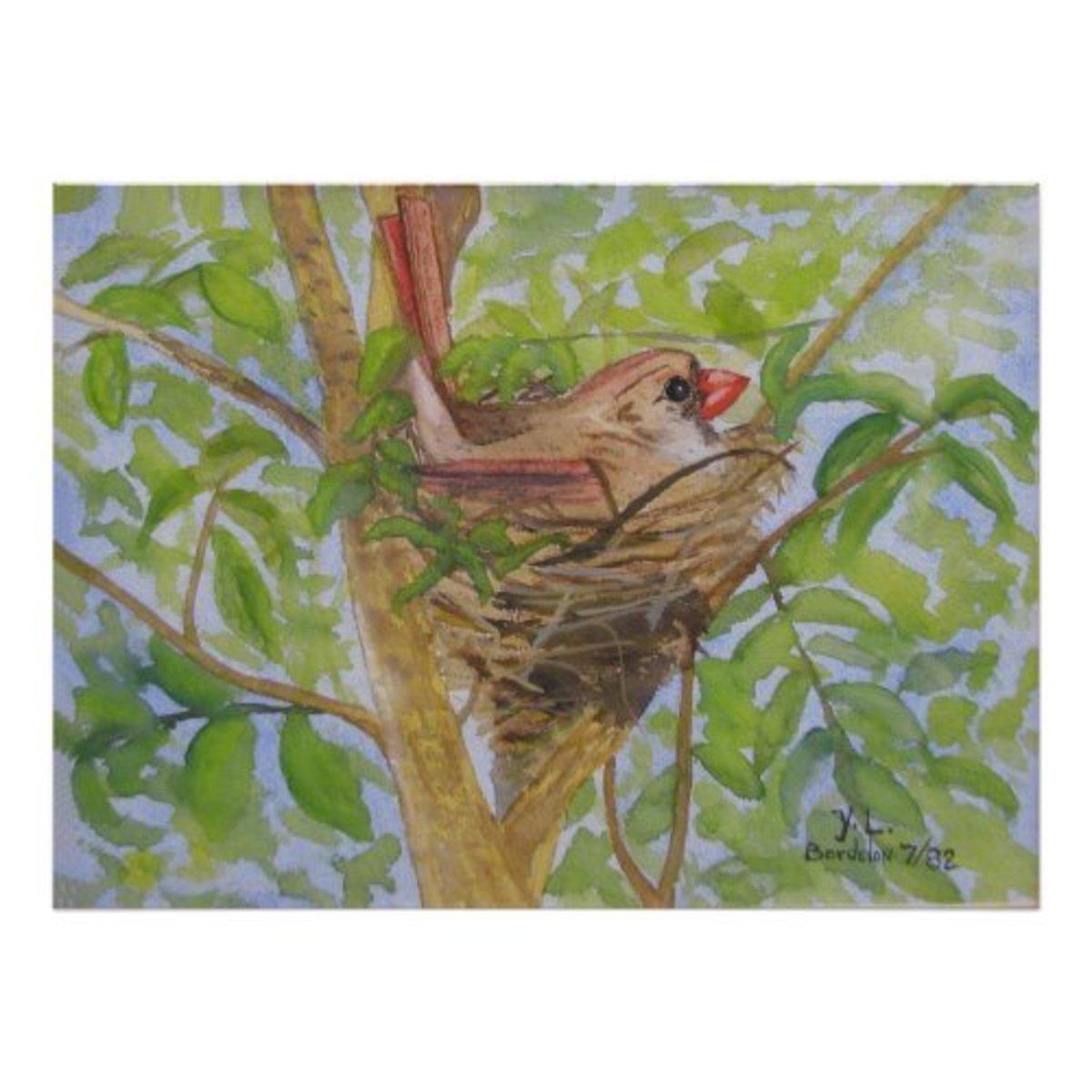 Mother Cardinal on nest