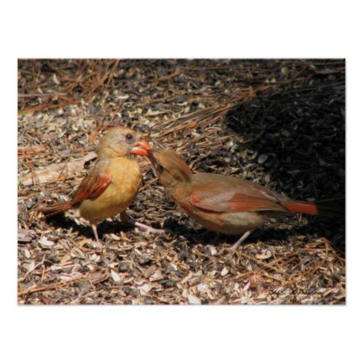 naturally_native_cardinals_nest
