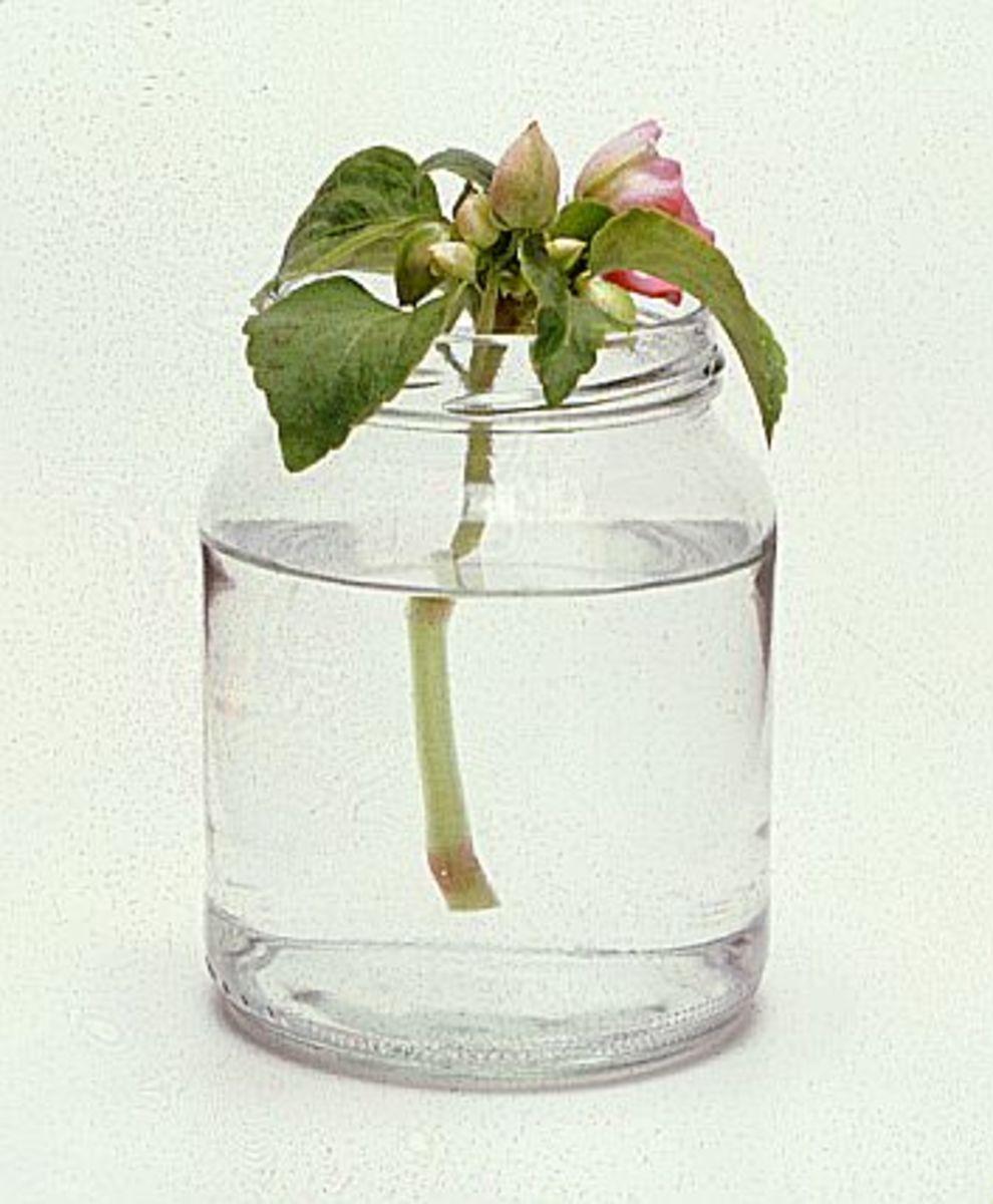 fun-classroom-activities-to-interest-children-in-plants