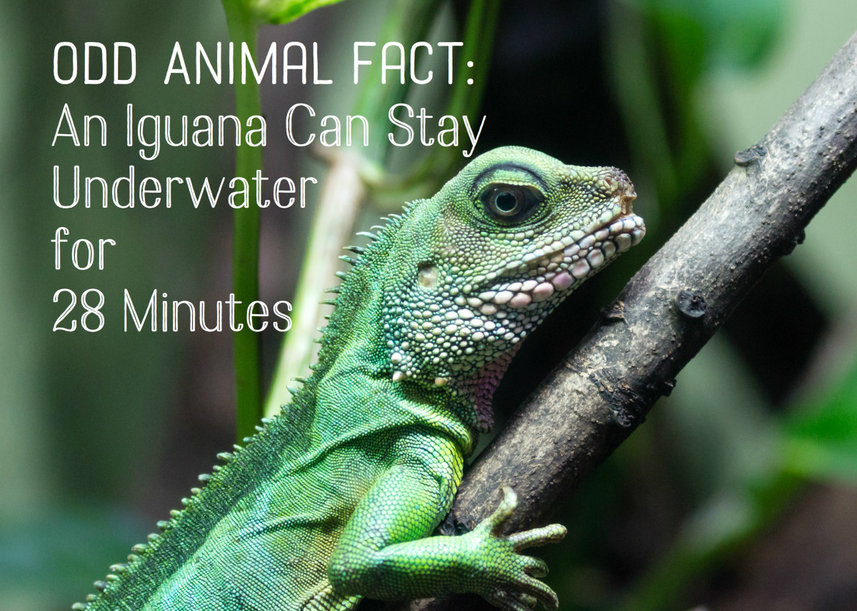 Over 200 Fun, Odd Facts Most People Don't Know | Owlcation