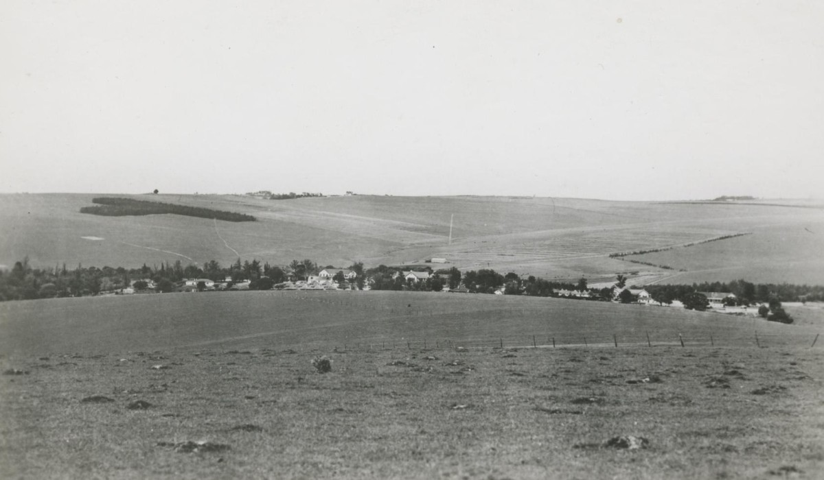 """A view over Blythswood showing the """"T"""" plantation in the background."""