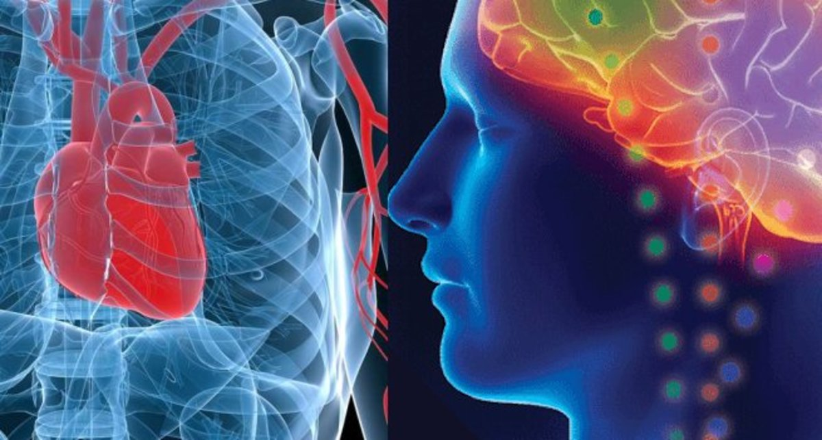 The connection between our hearts and our brains is deeper than we think.