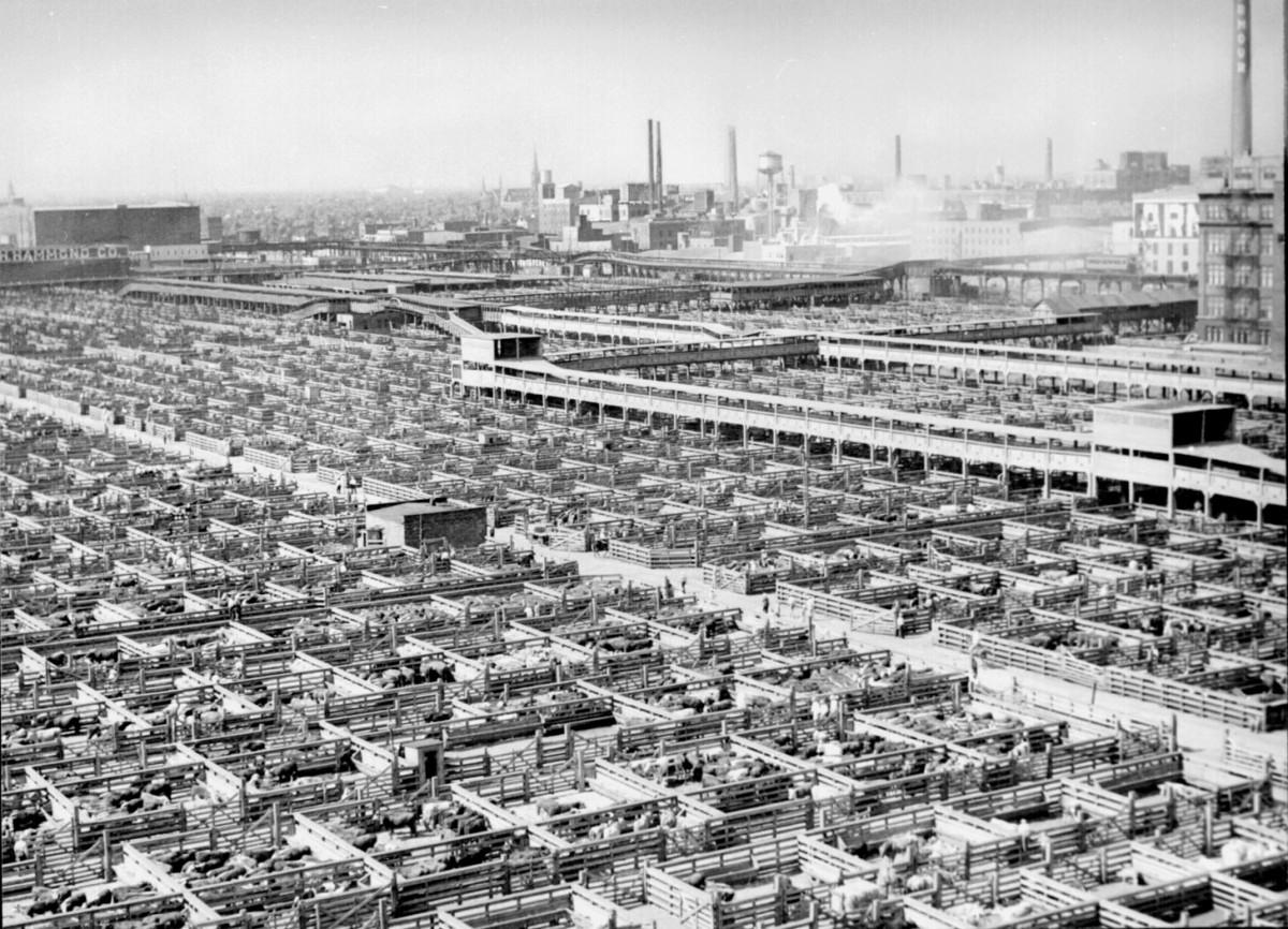 CHICAGO STOCK YARDS (PHOTO 1947)