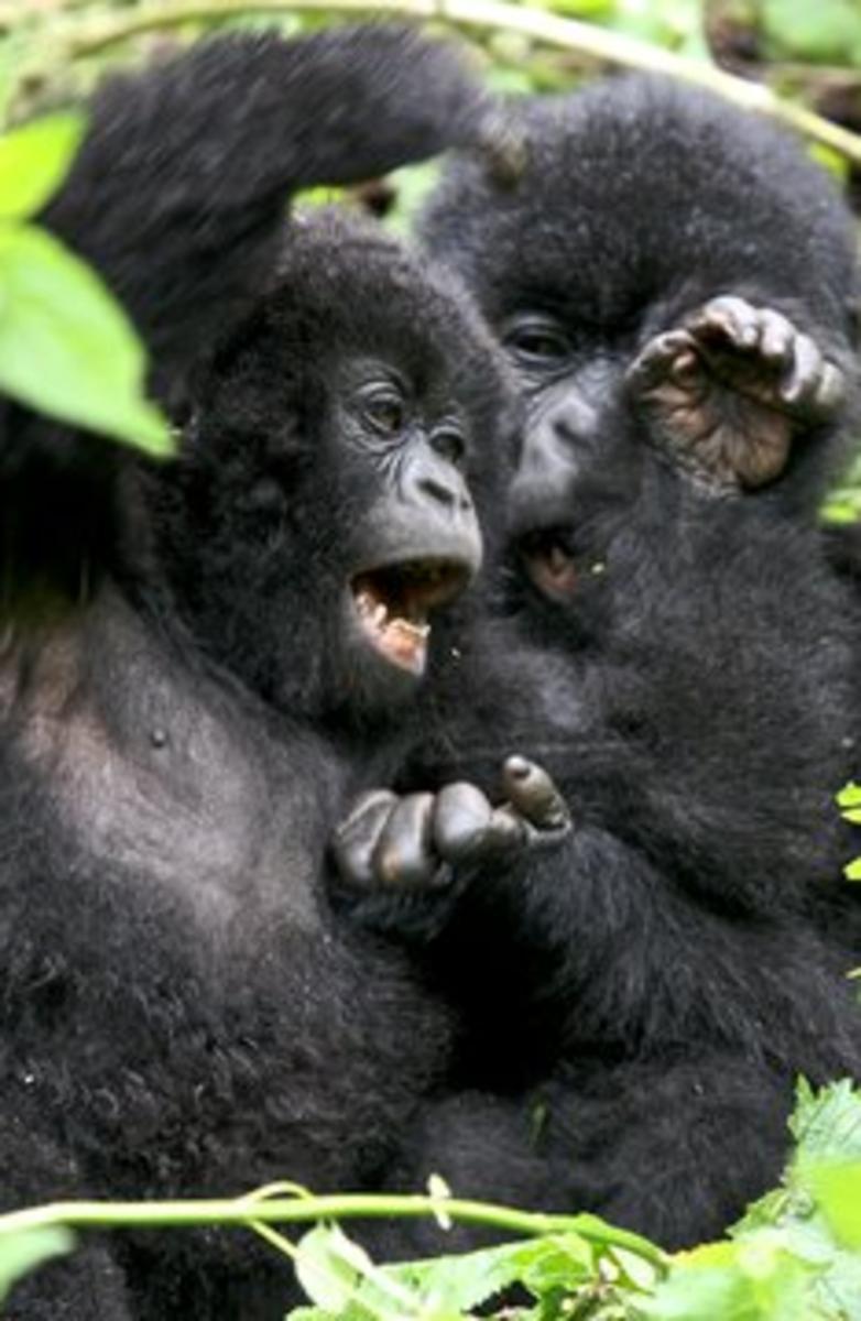 A Gorilla Hand.