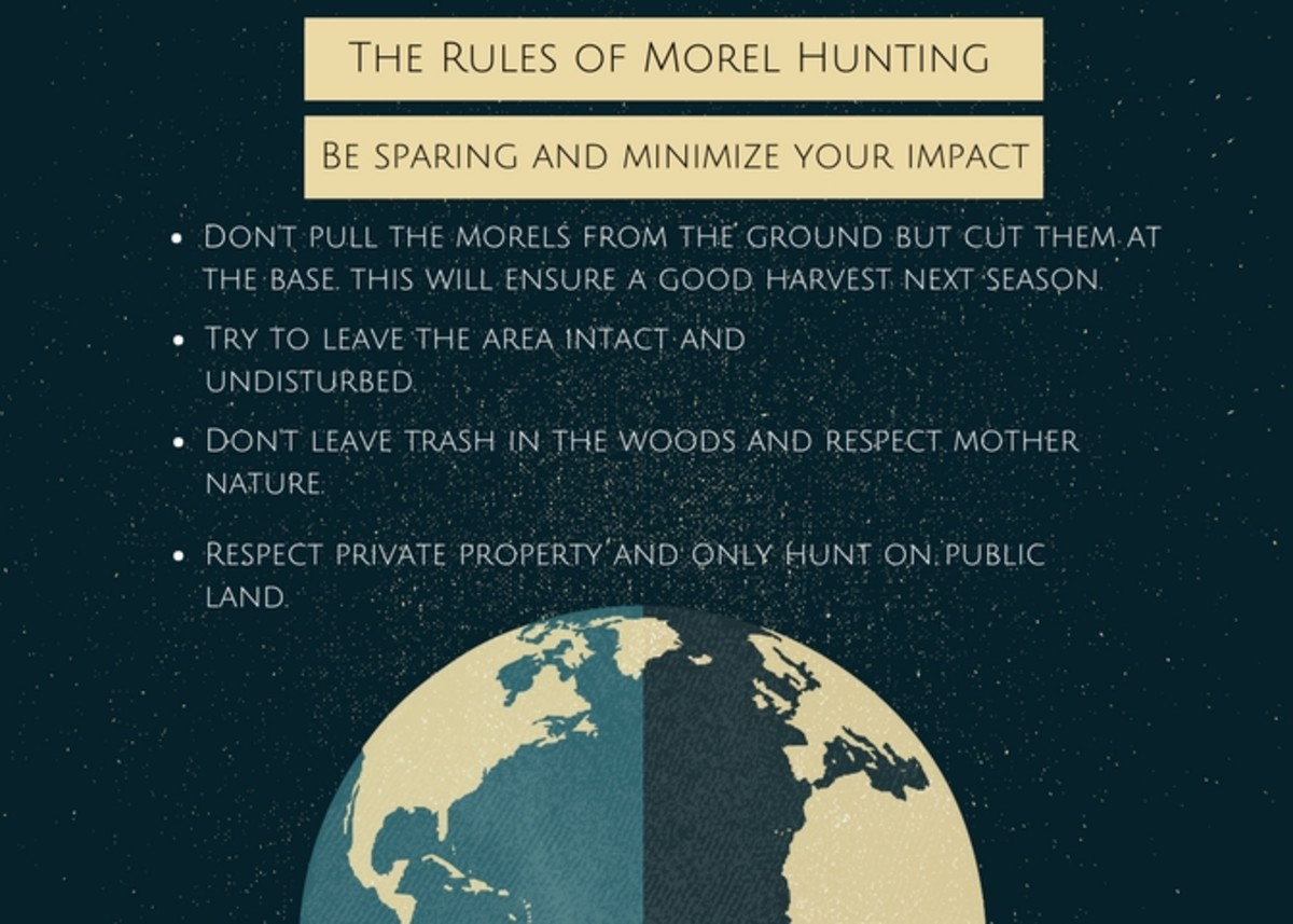 Leave no trace rules for mushroom hunting.