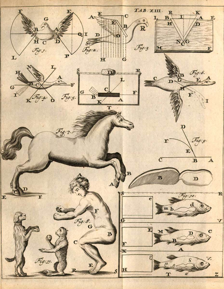 DRAWINGS OF LOCOMOTION BY GIOVANNI BORELLI