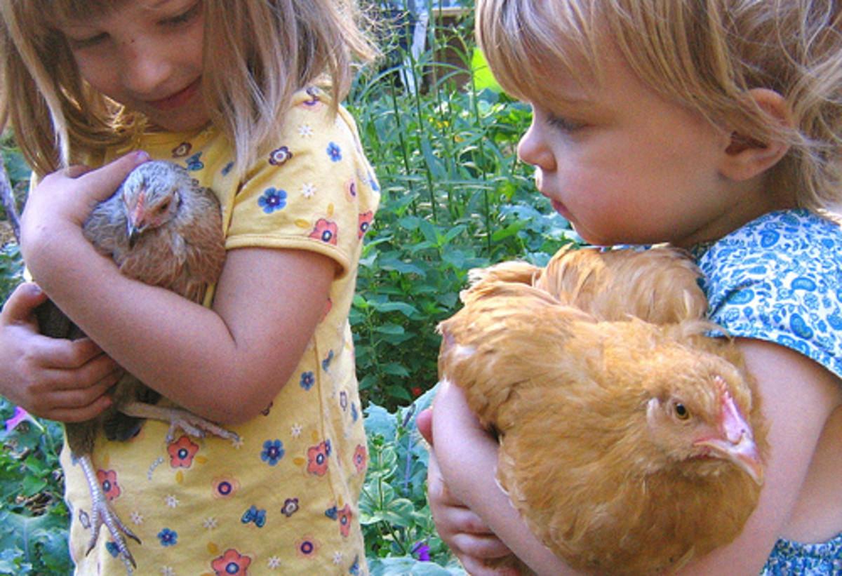 Girls holding chickens.