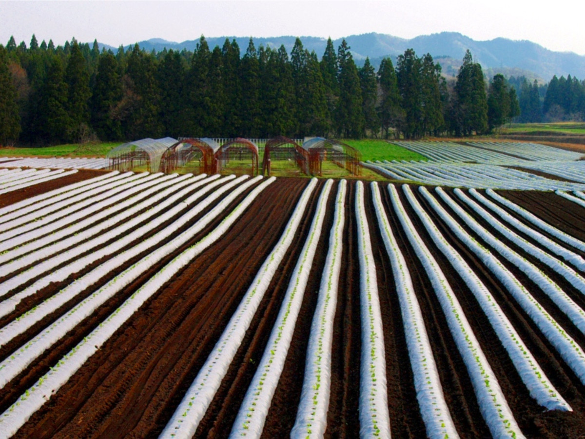 Cultivated farms and gardens are types of artificial (human-made) ecosystems.